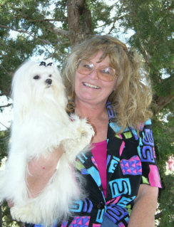 Maltese puppy breeder, breeder, dog breeders, maltese breeder, maltese breeders